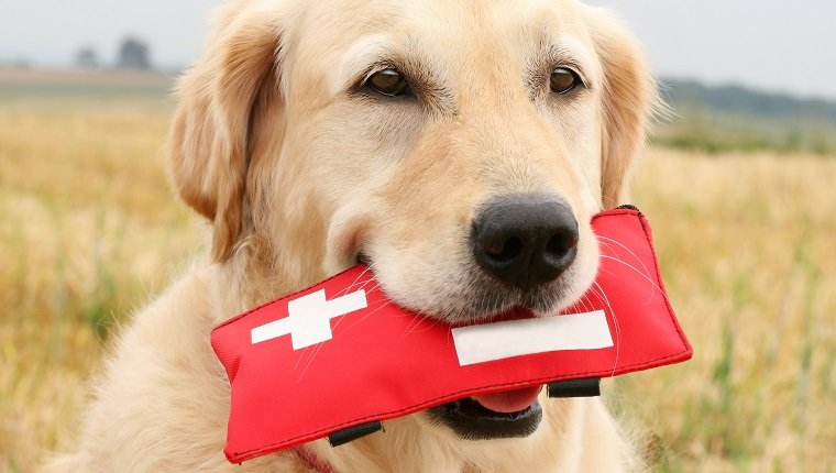 Dog First Aid Kit 1