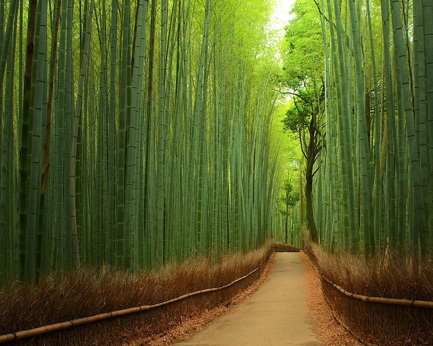 Amazing Tree Tunnels 6