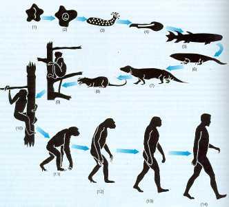 Evolución extendida