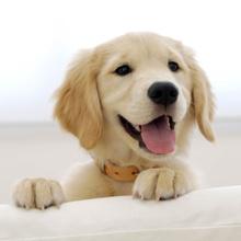 Las 10 mejores razas perro de compañía