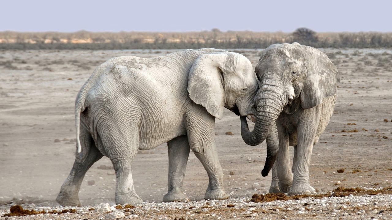 Elephant 1170108 1280
