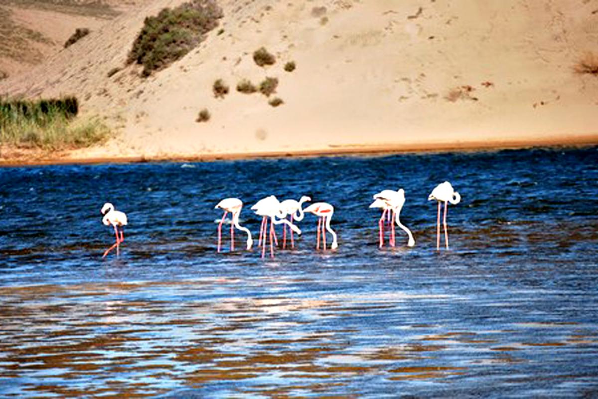 Parque nacional de Souss-Massa