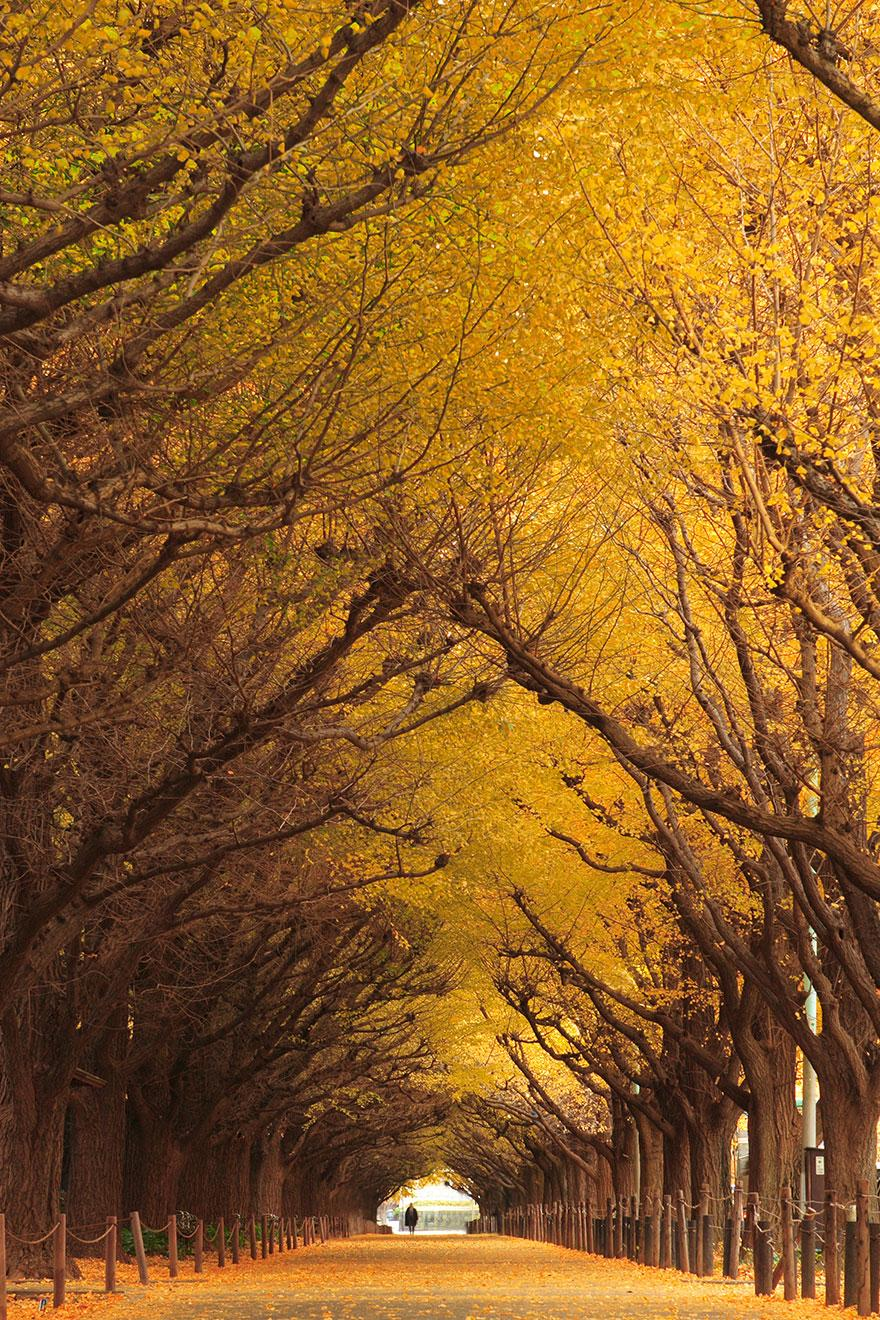 Amazing Tree Tunnels 10