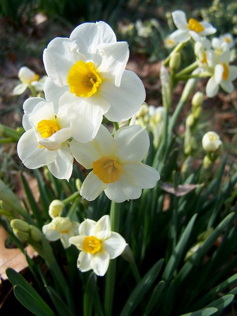 Narcisse - beqbe.com