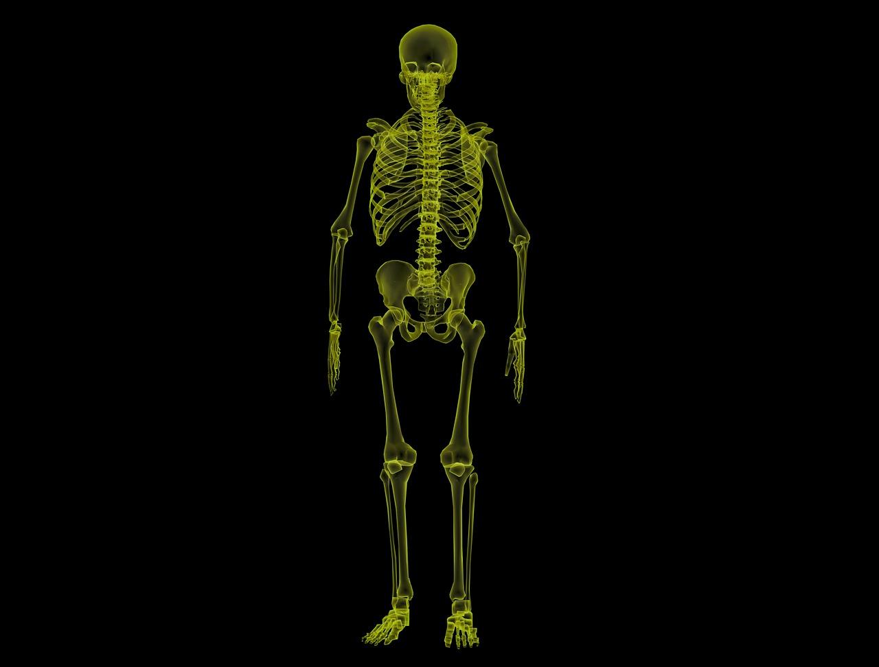 Human Skeleton 1813086 1280