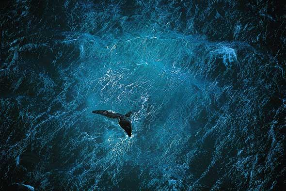 Planet Ocean Copyright Yann Arthus Bertrand