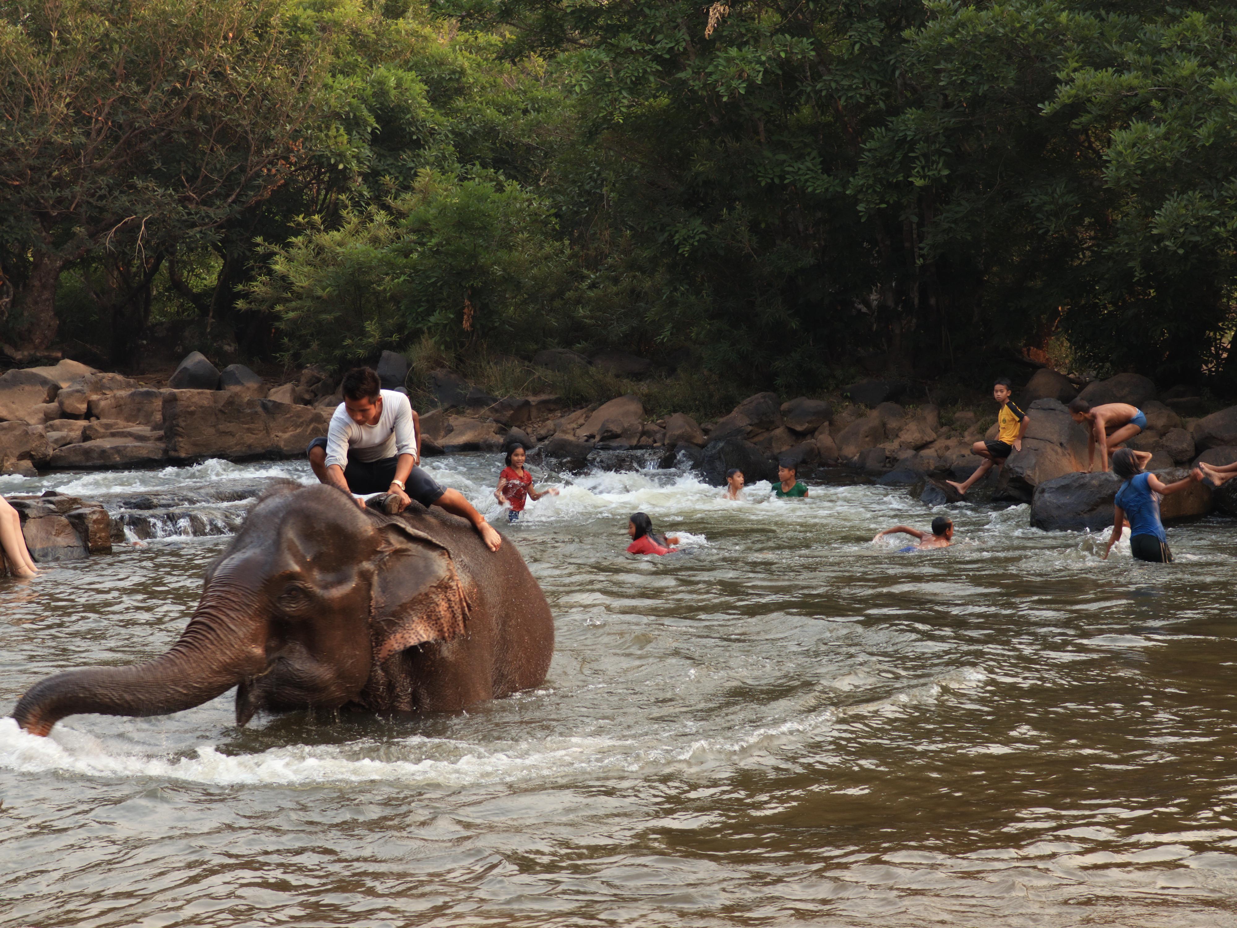 Un elefante interrumpe el baño
