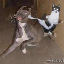 Estos Animales locos :