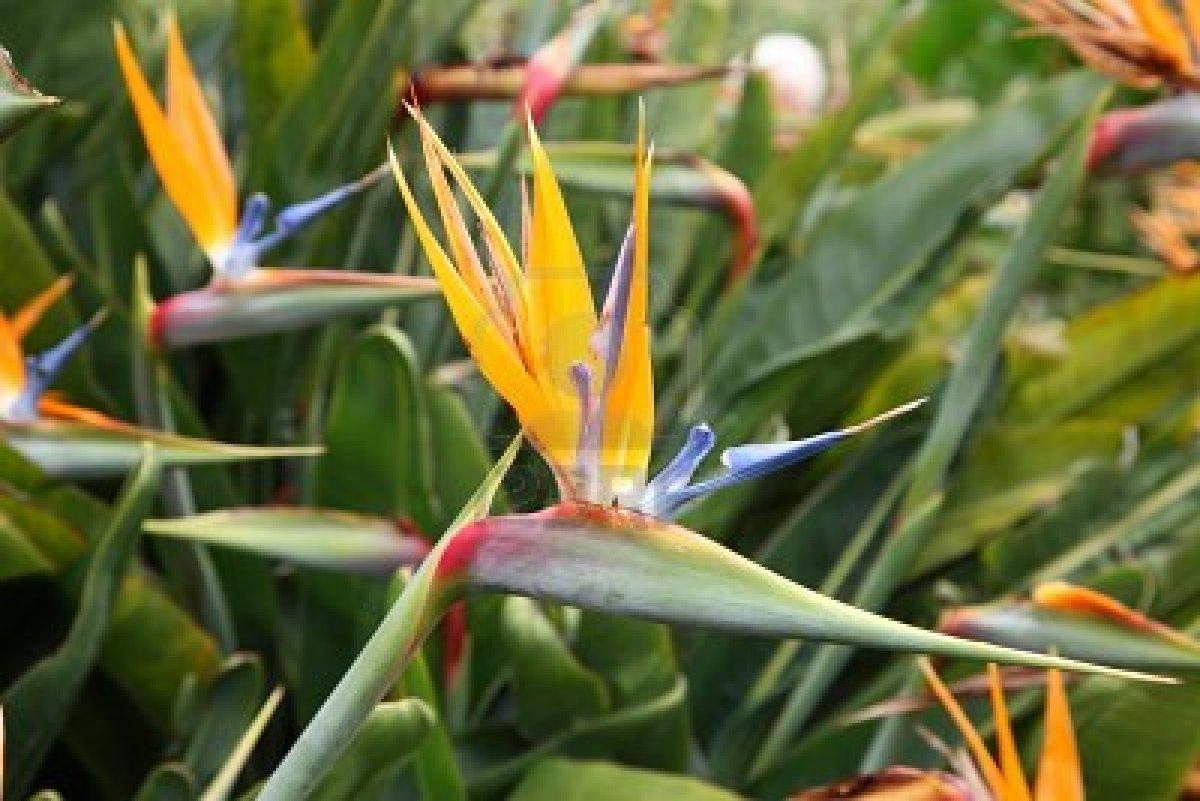 9008896 Fleurs Exotiques Sur Les Les Canaries
