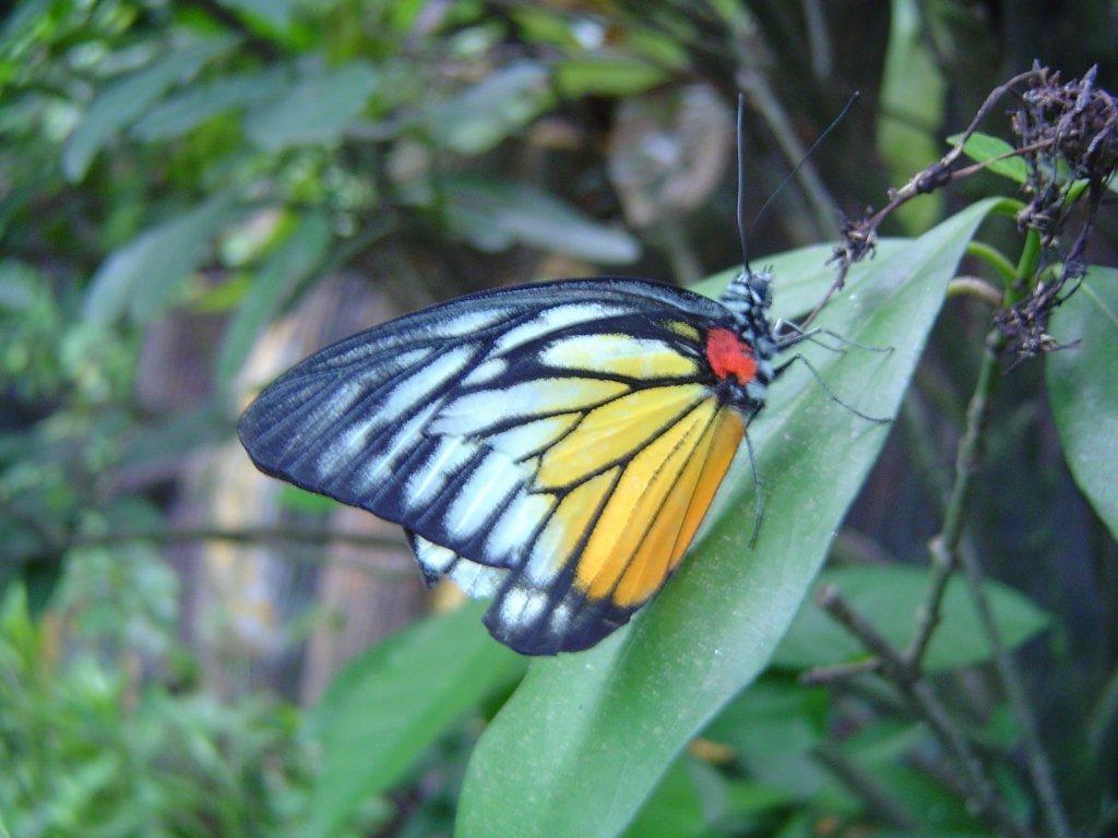 Mariposas Insectos De Color Verde Amarillo Negro Rojo
