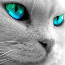 Nekko Cat Orozco