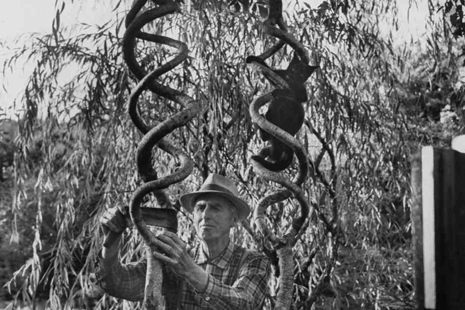 Axel Erlandson.No,this is not a climbing tree for cats.