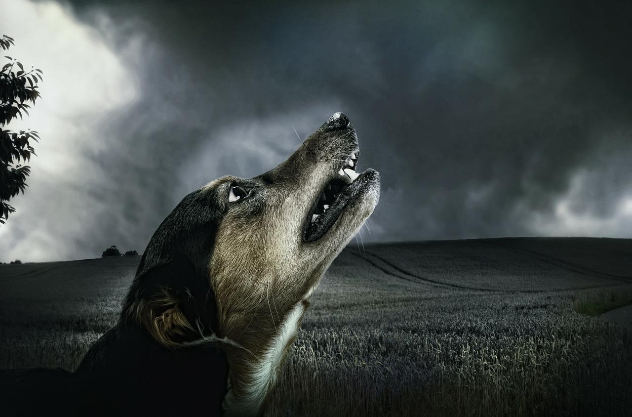 Dog 183288 1280