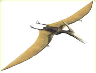6. Pterosaurio