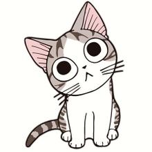 Amo a los Gatos