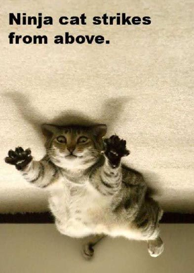 Funny Lol Cats 3081