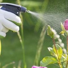 Préparer un insecticide naturel