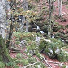 Otoño en Aller-Asturias