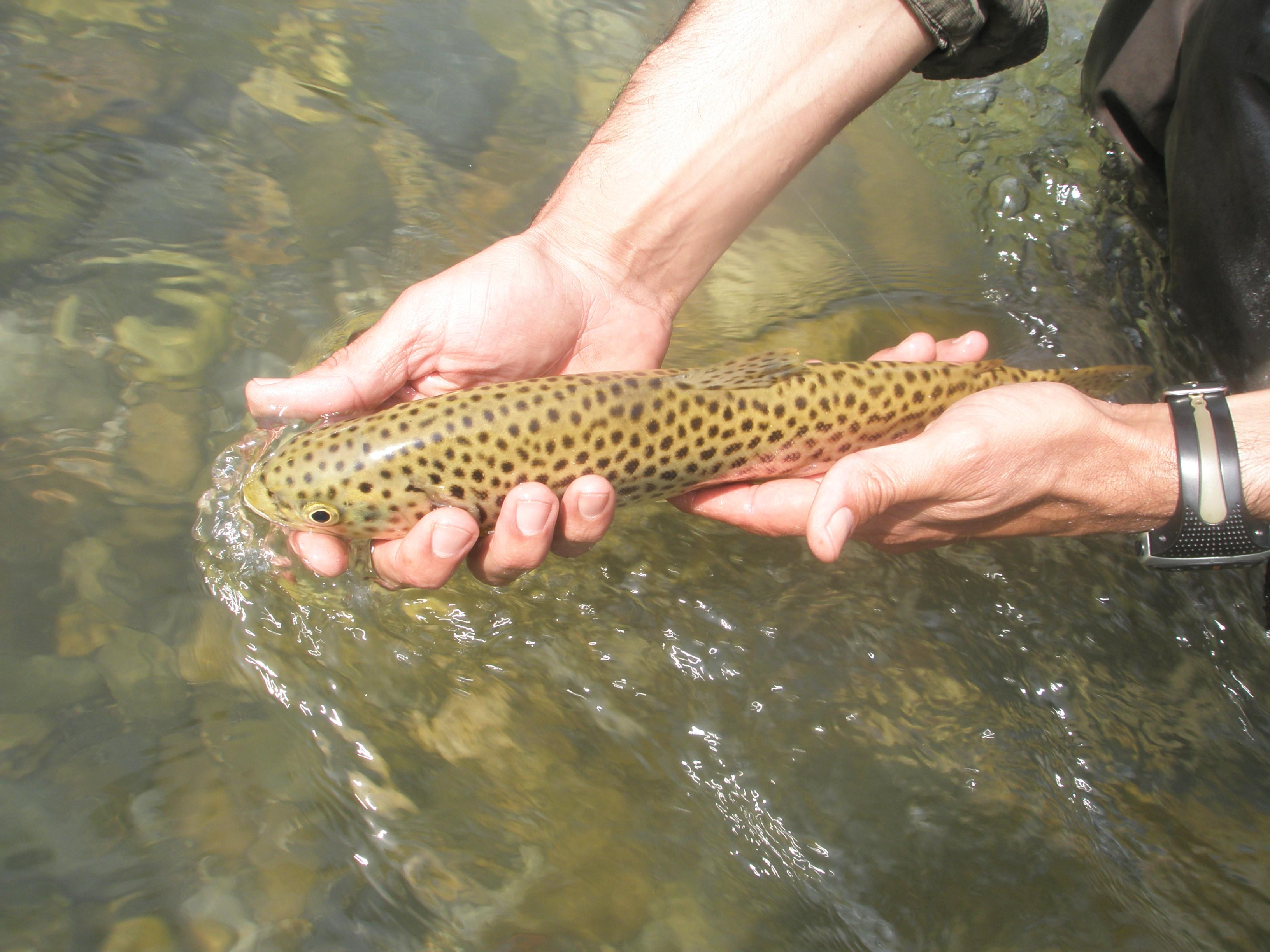 Pesca 2014 038