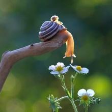 Un monde miniature  d' Escargots