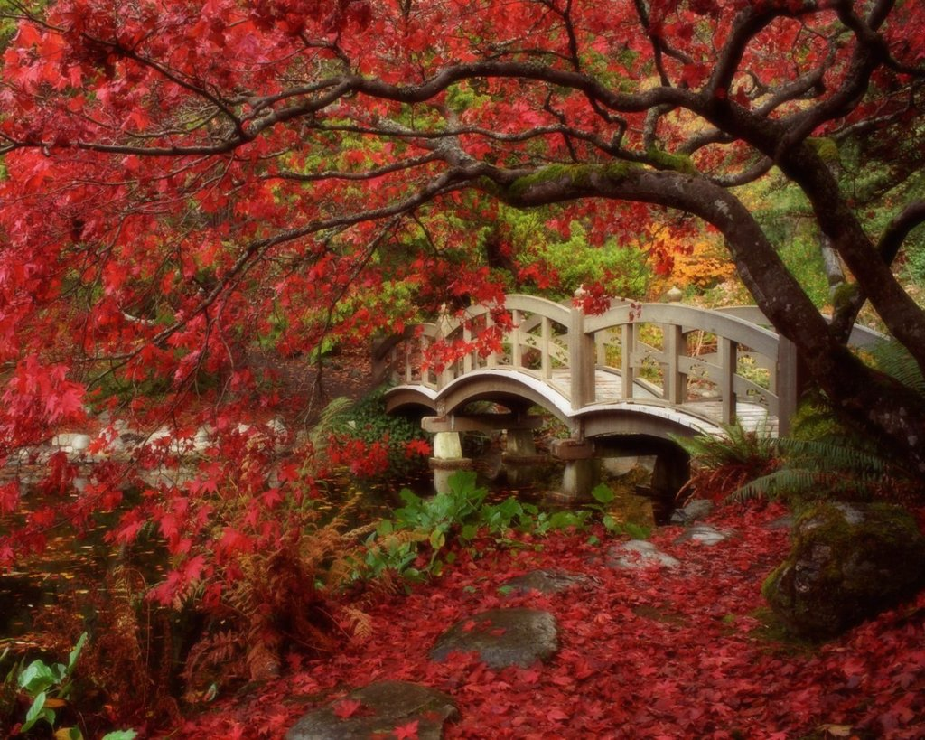 Jardin Japones Paisaje De Japon