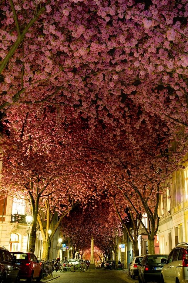 Rue De Bonn Allemagne