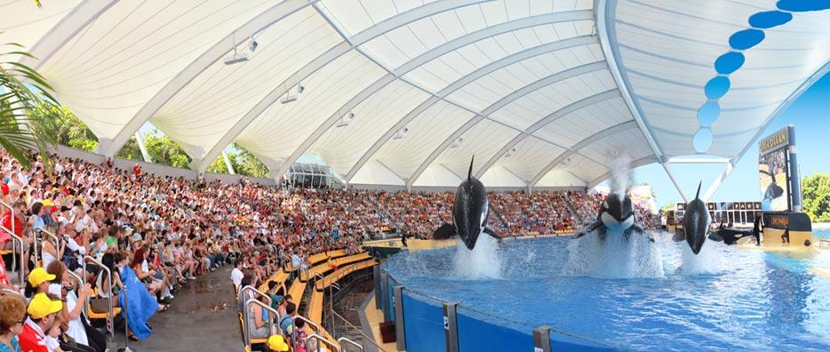 Visita los espectáculos de orcas de Loro Parque