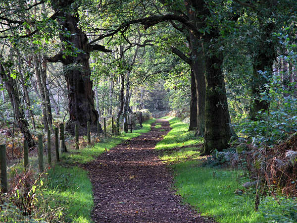Sherwood Forestq