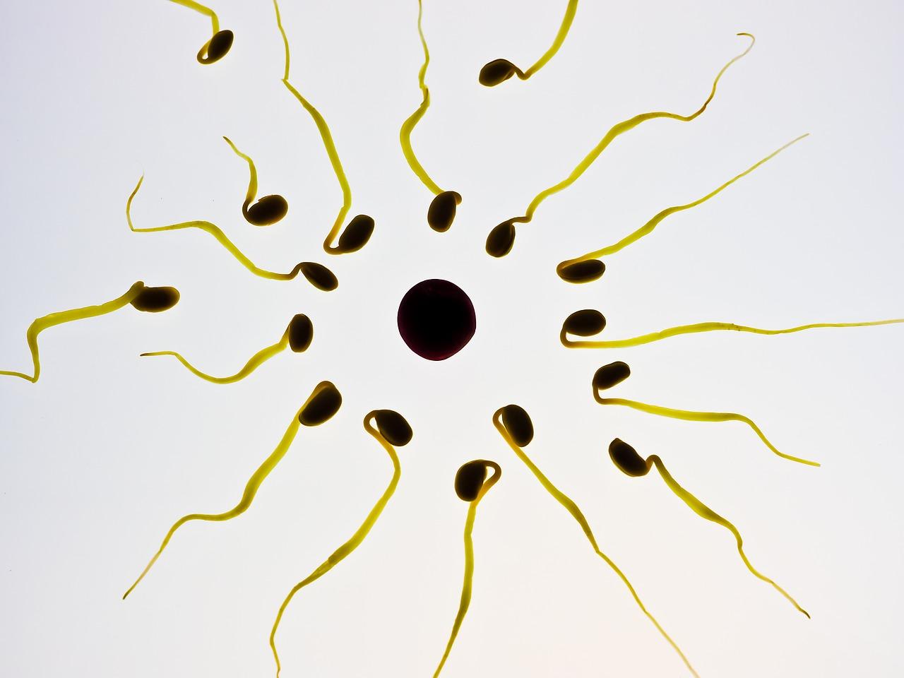 Sperm 956481 1280