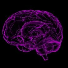 10 cosas sobre el cerebro