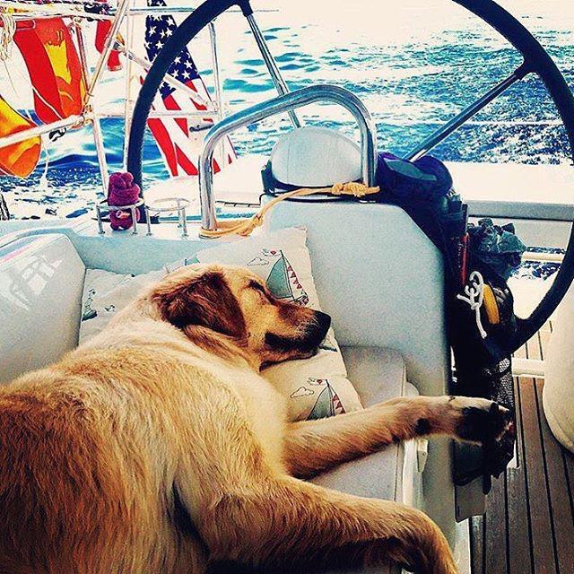 Yanpy Post 59 Dog Skipper