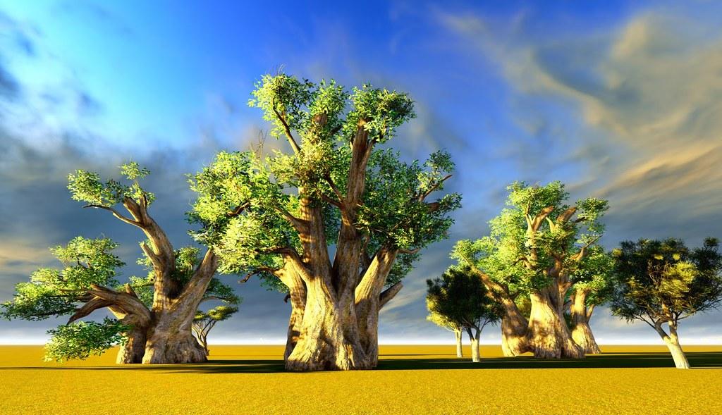 American Baobabs Arboles En Africa Paisajes Lugares Rarezas