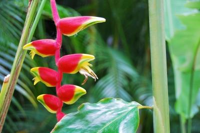 Fleurs Tropicales Photos Fleurs Plus Reussies 156116
