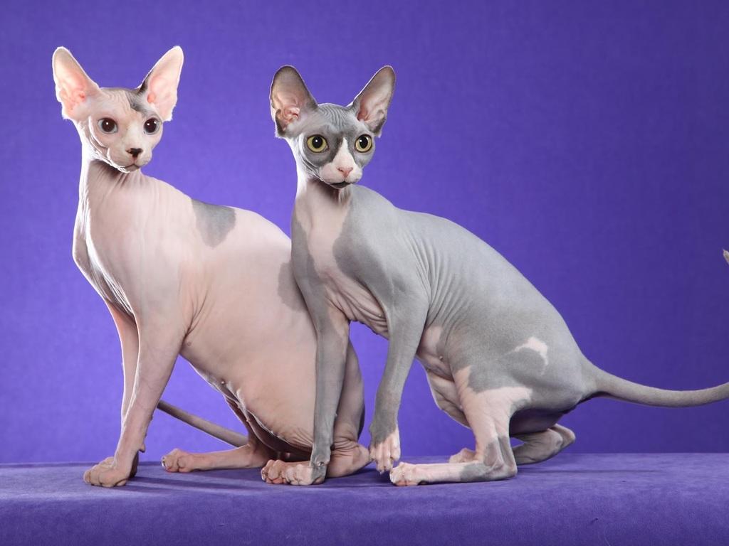 Cat23 Jpeg