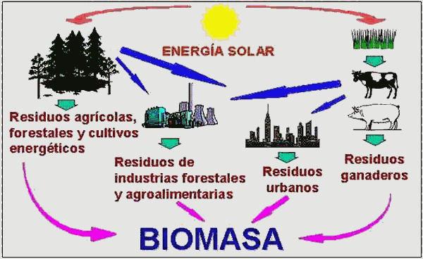 Biomasa Jpg