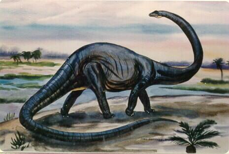 2. Diplodocus