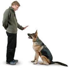 Adiestramiento básico para perros