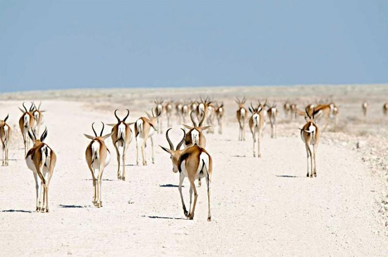 La migration animale.Click Here!
