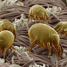 Imágenes microscópicas