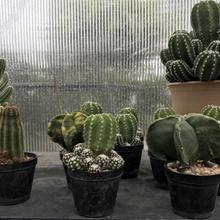 Best Succulent Grow Kits | Treesindoor