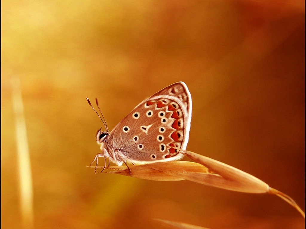 Mariposa Fondos De Escritorio
